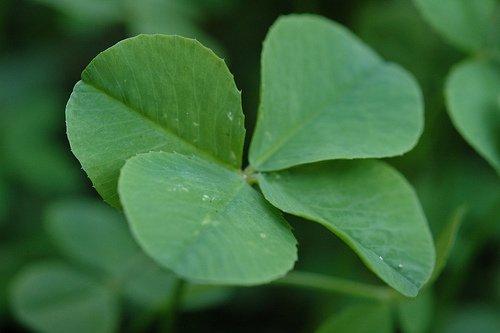 A Four Leaf Clover Resume