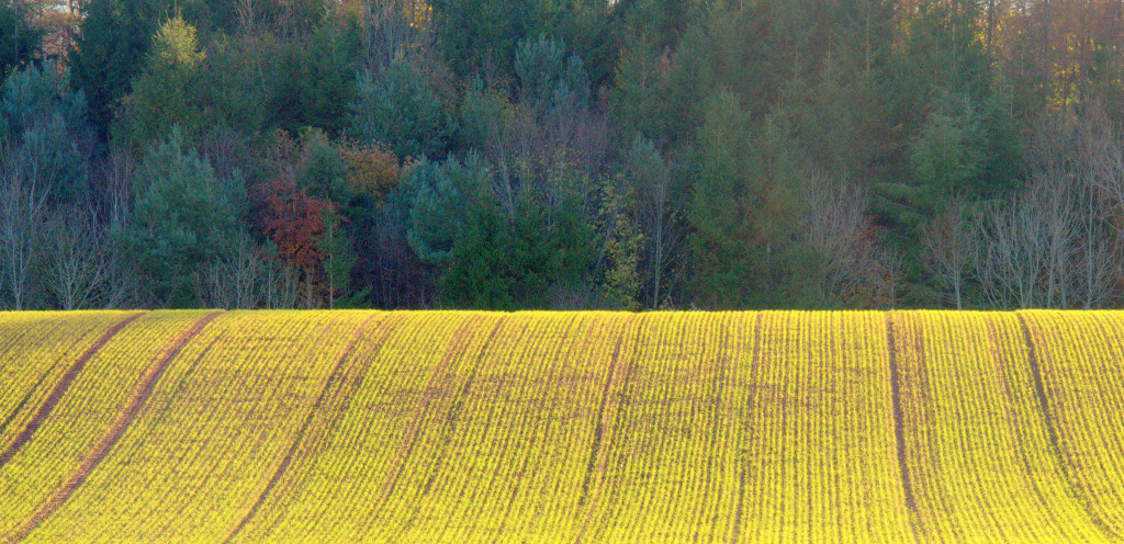 gold field 1024x496 The Painful Process of Naming Yourself