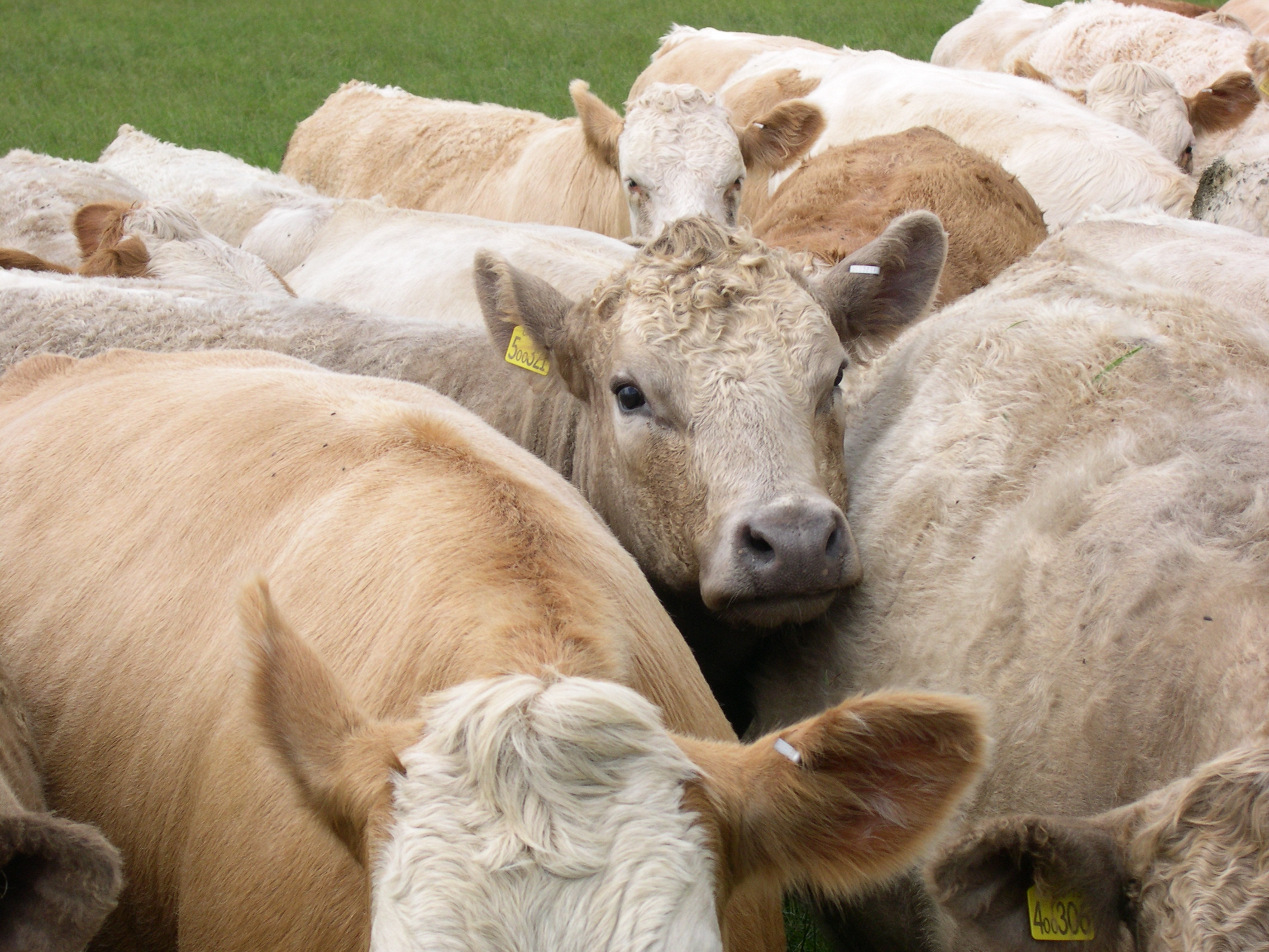 steer Are You Just One of the Herd? The LinkedIn Is Your Resume Debate Continues.