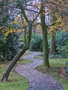 winding-path-for-blog-tim-green