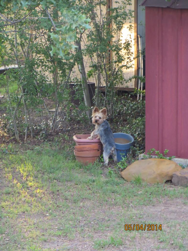 Roger at the flower pot